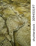 Small photo of Intertidal zone background: Granite slabs encrusted with many barnacles along Atlantic shore of Wonderland, an area with many tide pools, in Acadia National Park in Maine, USA (shallow depth of field)