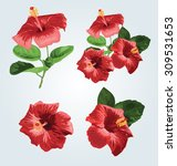 Vector Illustration Of Hibiscu...