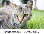 Stock photo a cat with yellow eyes in the green grass 309535817