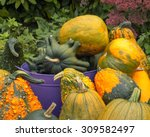 Gourds In Different Sizes ...