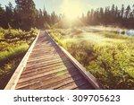 boardwalk in forest | Shutterstock . vector #309705623