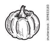 pumpkin sketch | Shutterstock .eps vector #309833183