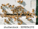 Honey Bees On Hive