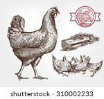 feeding chickens. set of... | Shutterstock .eps vector #310002233