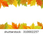 vector autumn background with... | Shutterstock .eps vector #310002257