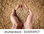 harvest  close up of farmer's... | Shutterstock . vector #310353917