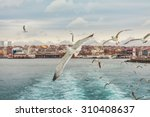 Seagull Istanbul  Bosporus ...