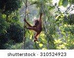 Malaysia Borneo Rainforest...