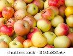 apples  | Shutterstock . vector #310583567