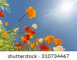 Poppy Field And Wild Flowers I...