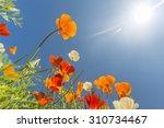 Poppy Field And Wild Flowers I...