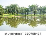 palm springs at park with pond   Shutterstock . vector #310908437