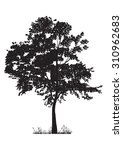 tree silhouette isolated on... | Shutterstock .eps vector #310962683