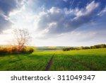 Beautiful Sunny Landscape
