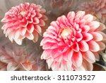 flower   Shutterstock . vector #311073527