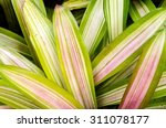 needs sunlight of leaves. those ... | Shutterstock . vector #311078177