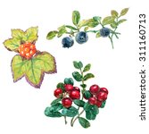 set of forest berries with... | Shutterstock . vector #311160713