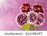 aster autumn flowers on... | Shutterstock . vector #311196197