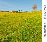 alpine pasture framed by forest ... | Shutterstock . vector #311270993