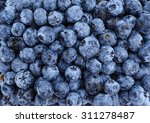 Large Beautiful Blueberries...