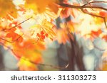 Colourful Leaves In Autumn...