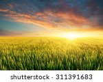agricultural landscape in the... | Shutterstock . vector #311391683