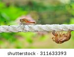 Red Dragonfly Of Japan