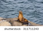 The Sea Lion On The Cliff At L...