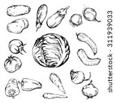 hand drawn different vegetables ... | Shutterstock .eps vector #311939033