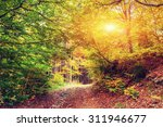 forest road in the autumn.... | Shutterstock . vector #311946677