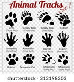 Animals Tracks   Vector Set  ...