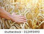 Farmer In Field Touching His...