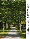 beautiful alley in the park in... | Shutterstock . vector #312671567