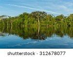 Landscape Amazon Rain Forest