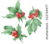 watercolor hand drawn holly... | Shutterstock . vector #312764477
