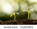 young plant growing in soil on... | Shutterstock . vector #312810833