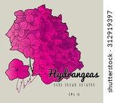 hydrangeas. hand drawn artwork. ... | Shutterstock .eps vector #312919397