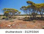 Typical Australian Wild Scene