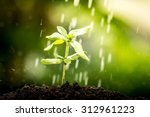 young plant growing in soil on... | Shutterstock . vector #312961223
