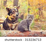 Stock photo dog and cat best friends sitting together outdoors in autumn forest 313236713