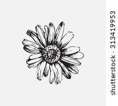 engraved hand drawn... | Shutterstock .eps vector #313419953