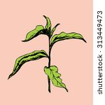 vector sketch of sprout tree | Shutterstock .eps vector #313449473