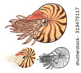 high quality nautilus cartoon... | Shutterstock .eps vector #313475117