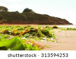 Seaweed Littering A Sandy Beach