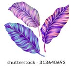 3 isolated tropical leaves.... | Shutterstock . vector #313640693