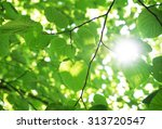 green leaves in the forest with ... | Shutterstock . vector #313720547