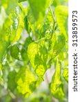 leaf in light | Shutterstock . vector #313859573