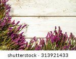 Flowers Of Heather In Purple...