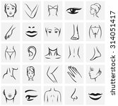 female body parts icons set.... | Shutterstock .eps vector #314051417