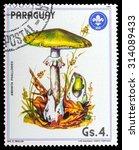 Small photo of PARAGUAY - CIRCA 1984: a stamp printed in the Paraguay, shows mushrooms AMANITA PHALLOIDES, series mushrooms, circa 1984